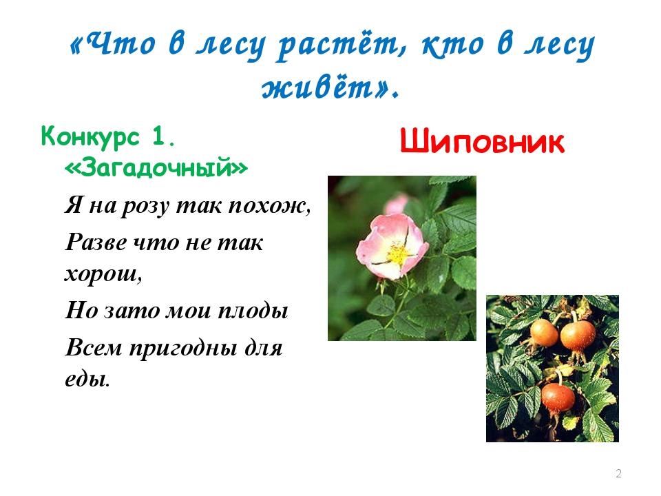 «Что в лесу растёт, кто в лесу живёт». Конкурс 1. «Загадочный» Я на розу так...