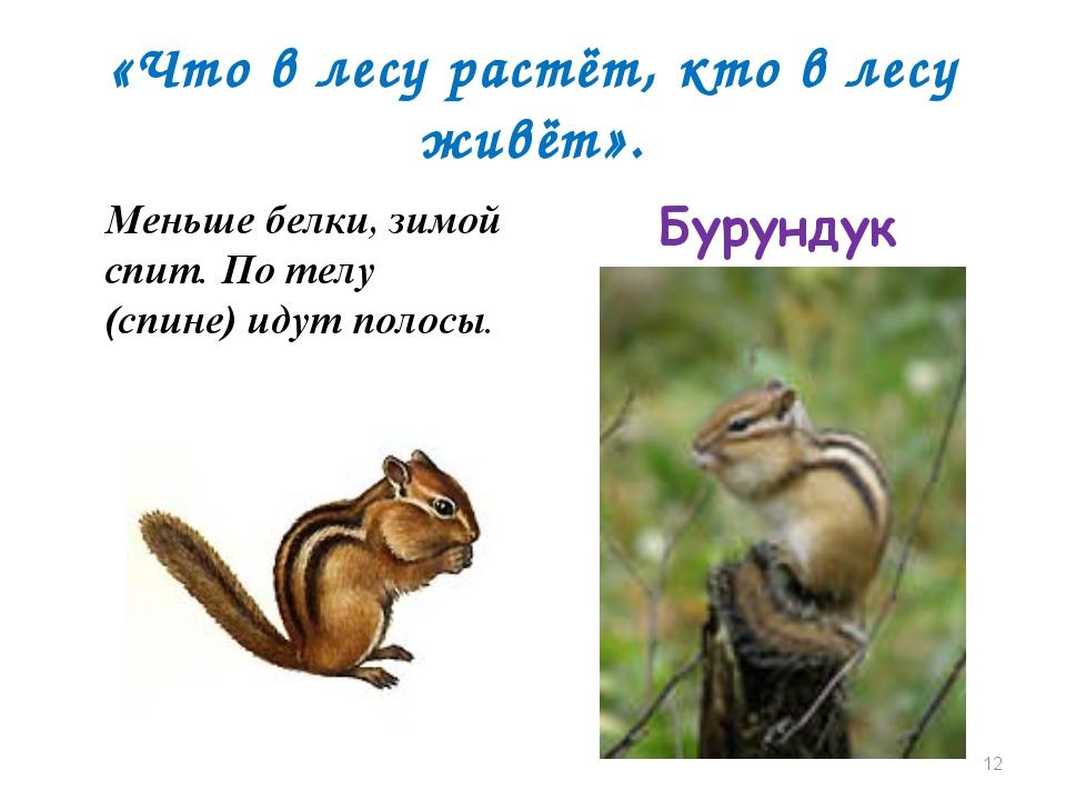 «Что в лесу растёт, кто в лесу живёт». Меньше белки, зимой спит. По телу (спи...