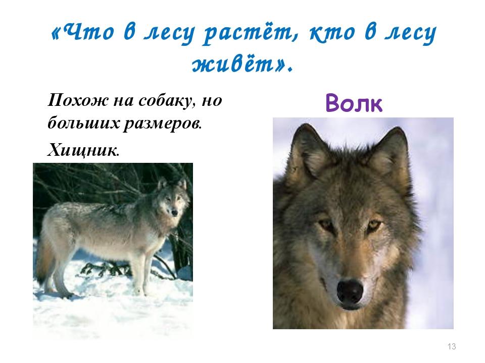 «Что в лесу растёт, кто в лесу живёт». Похож на собаку, но больших размеров....