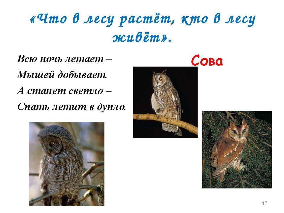 «Что в лесу растёт, кто в лесу живёт». Всю ночь летает – Мышей добывает. А ст...