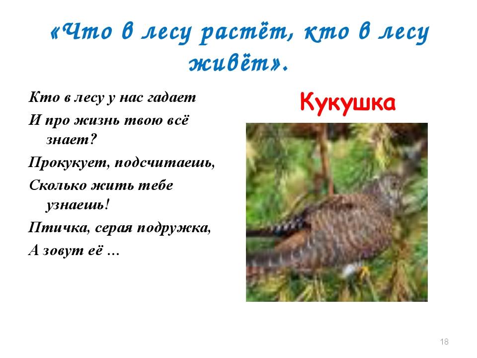 «Что в лесу растёт, кто в лесу живёт». Кто в лесу у нас гадает И про жизнь тв...