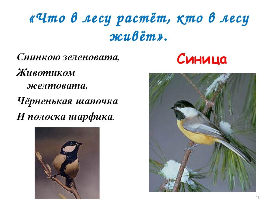 «Что в лесу растёт, кто в лесу живёт». Спинкою зеленовата, Животиком желтоват...