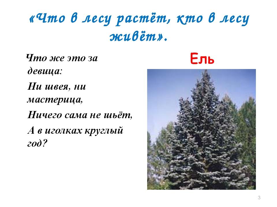 «Что в лесу растёт, кто в лесу живёт». Что же это за девица: Ни швея, ни маст...