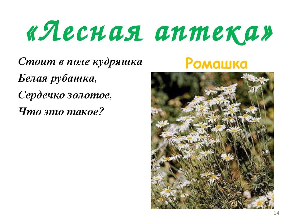 «Лесная аптека» Стоит в поле кудряшка Белая рубашка, Сердечко золотое, Что эт...