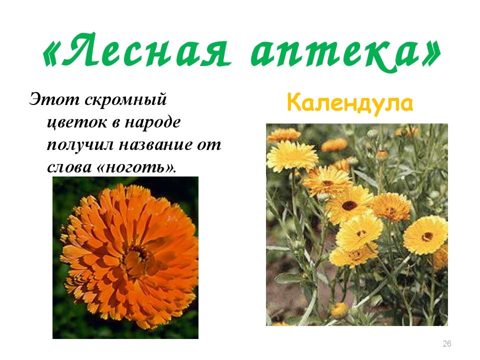«Лесная аптека» Этот скромный цветок в народе получил название от слова «ного...