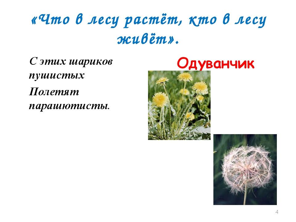 «Что в лесу растёт, кто в лесу живёт». С этих шариков пушистых Полетят парашю...