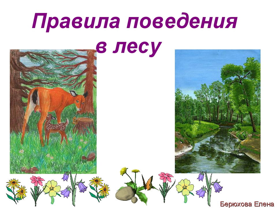 Правила поведения в лесу Берюхова Елена
