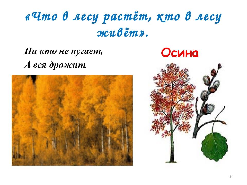 «Что в лесу растёт, кто в лесу живёт». Ни кто не пугает, А вся дрожит. Осина *