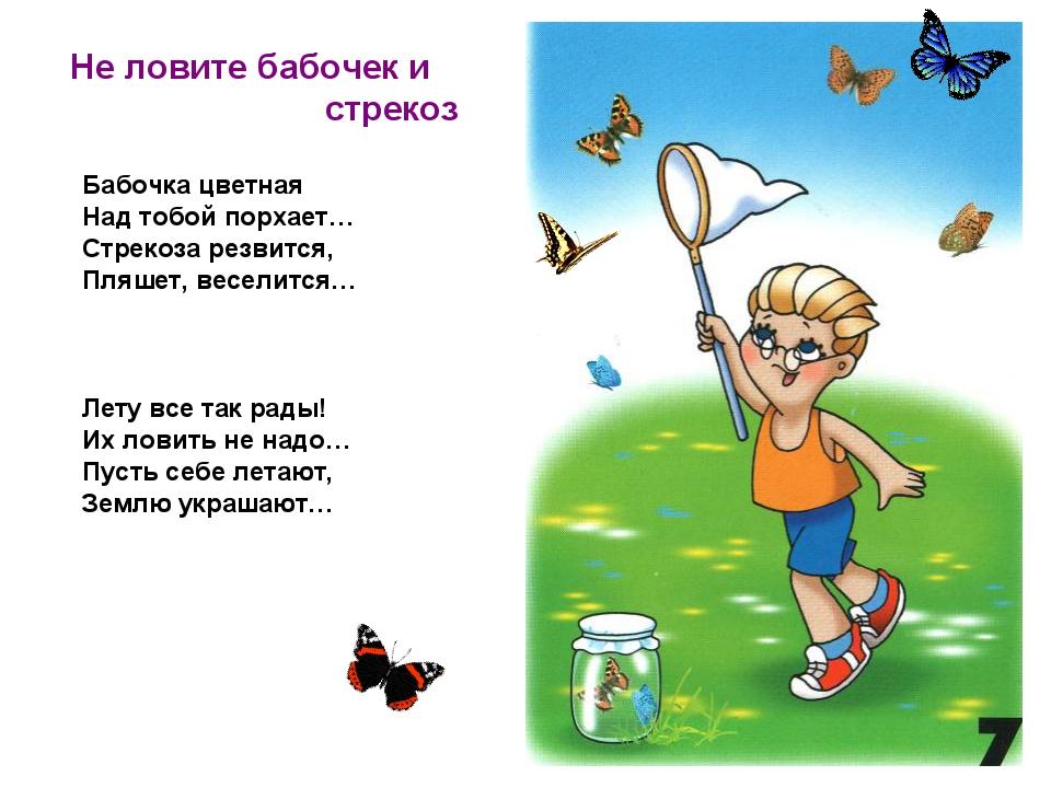 Не ловите бабочек и стрекоз Бабочка цветная Над тобой порхает… Стрекоза резв...