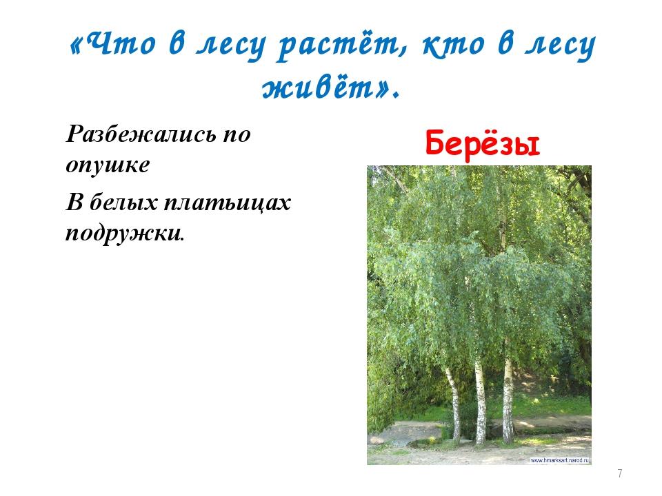 «Что в лесу растёт, кто в лесу живёт». Разбежались по опушке В белых платьица...
