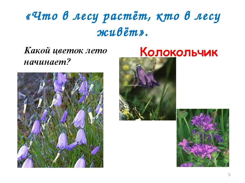 «Что в лесу растёт, кто в лесу живёт». Какой цветок лето начинает? Колокольчи...
