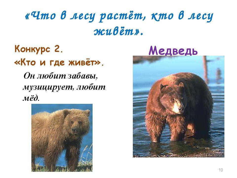 «Что в лесу растёт, кто в лесу живёт». Конкурс 2. «Кто и где живёт». Он любит...