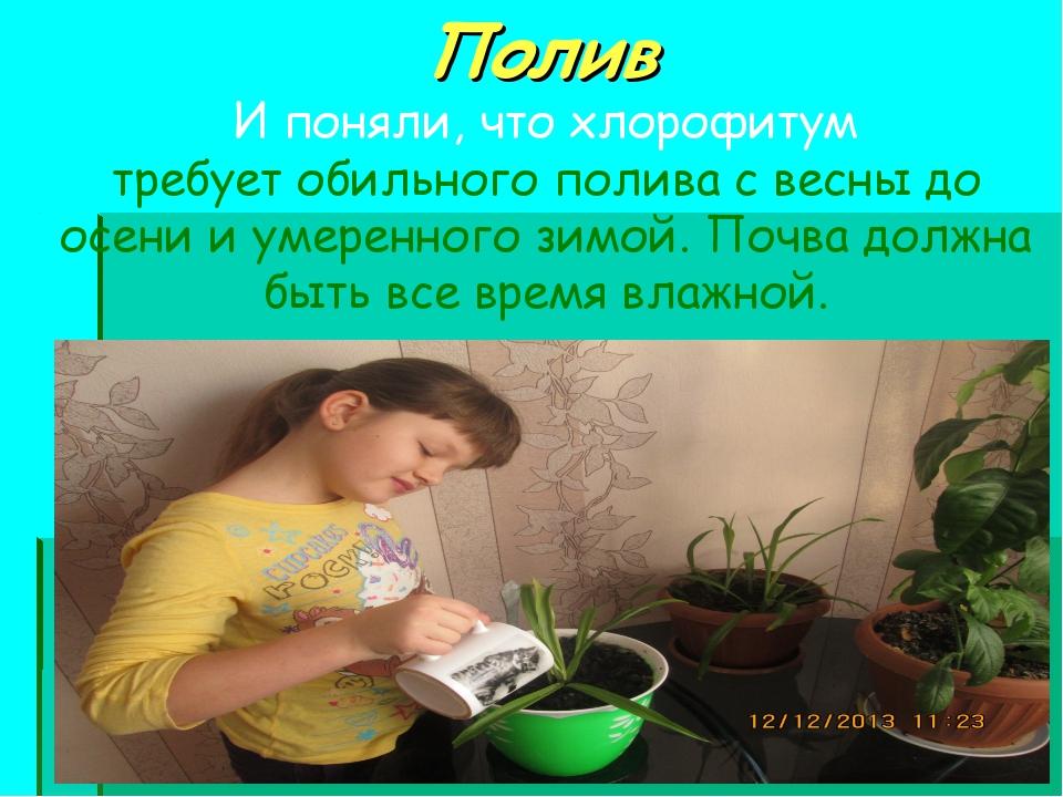 Полив И поняли, что хлорофитум требует обильного полива с весны до осени и ум...