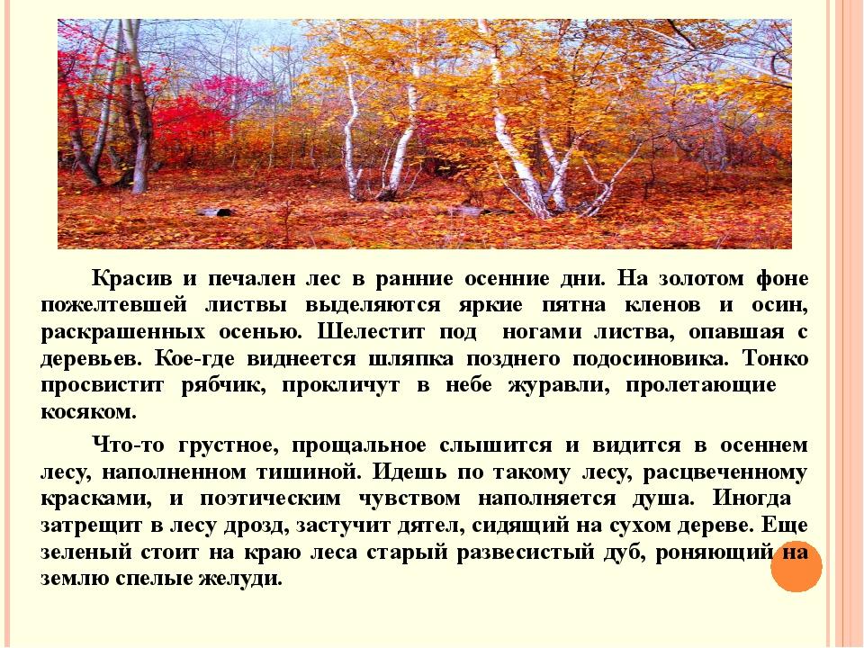 Красив и печален лес в ранние осенние дни. На золотом фоне пожелтевшей листвы...