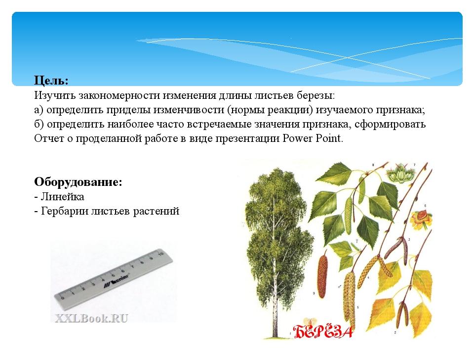 Цель: Изучить закономерности изменения длины листьев березы: а) определить пр...