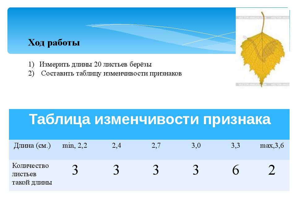 Ход работы Измерить длины 20 листьев берёзы Составить таблицу изменчивости пр...
