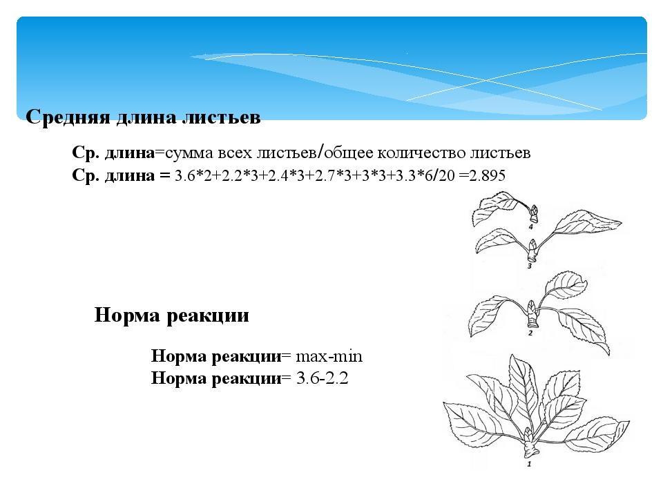 Средняя длина листьев Ср. длина=сумма всех листьев/общее количество листьев С...