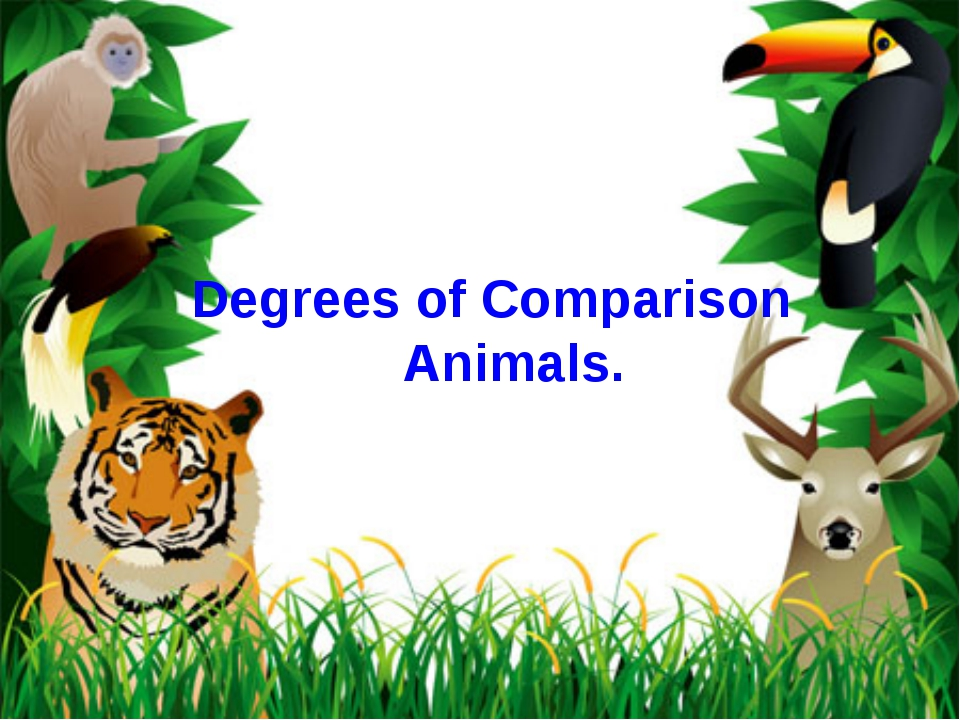 Degrees of Comparison Animals.