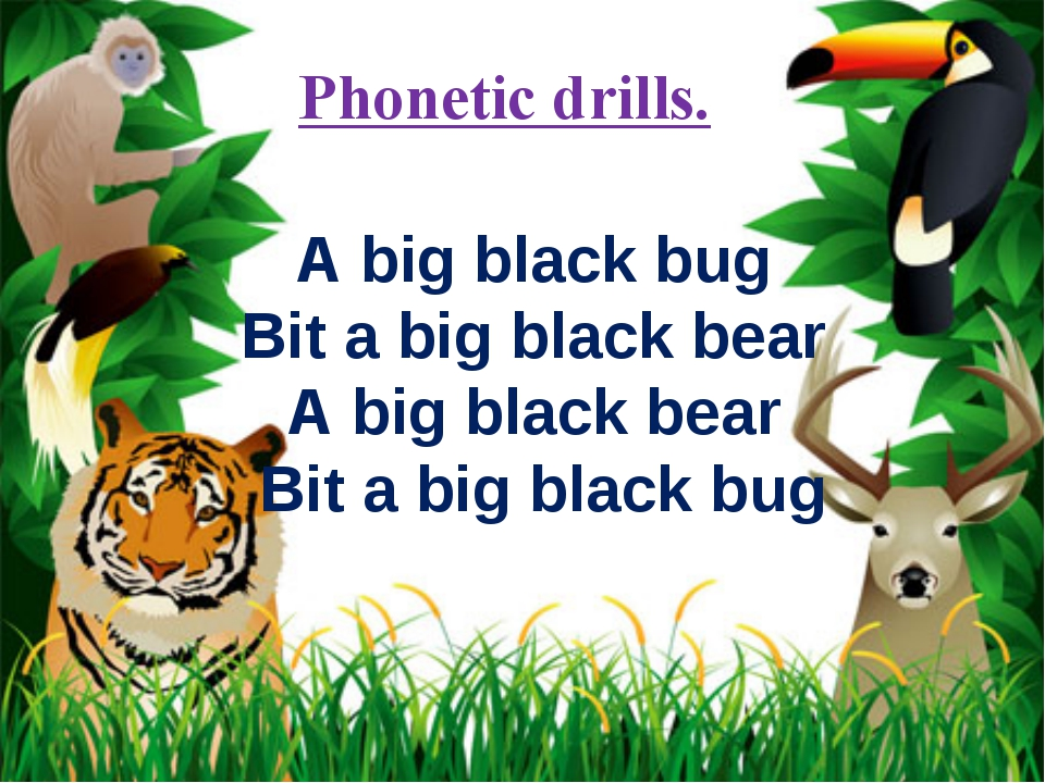 Phonetic drills. A big black bug Bit a big black bear A big black bear Bit a...
