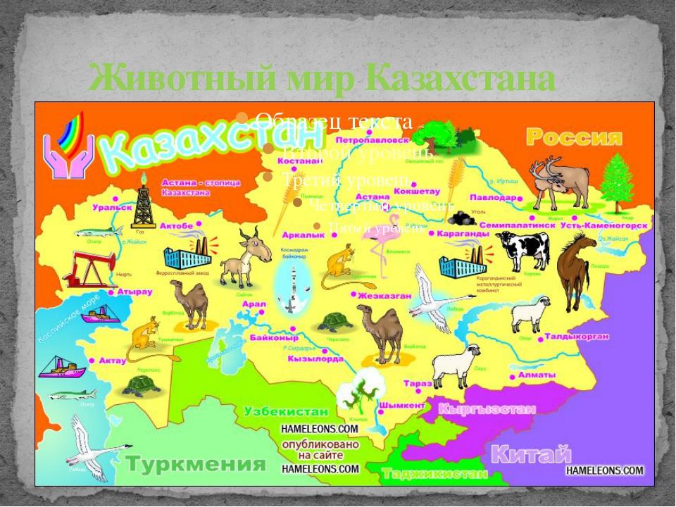 Реферат животный и растительный мир казахстана 1448