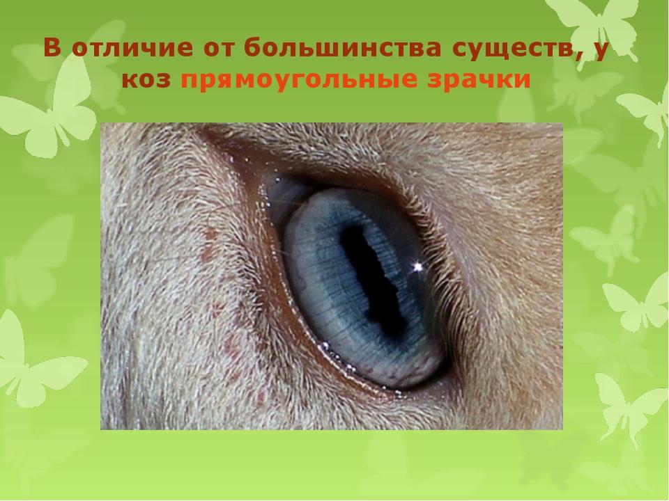 В отличие от большинства существ, у коз прямоугольные зрачки