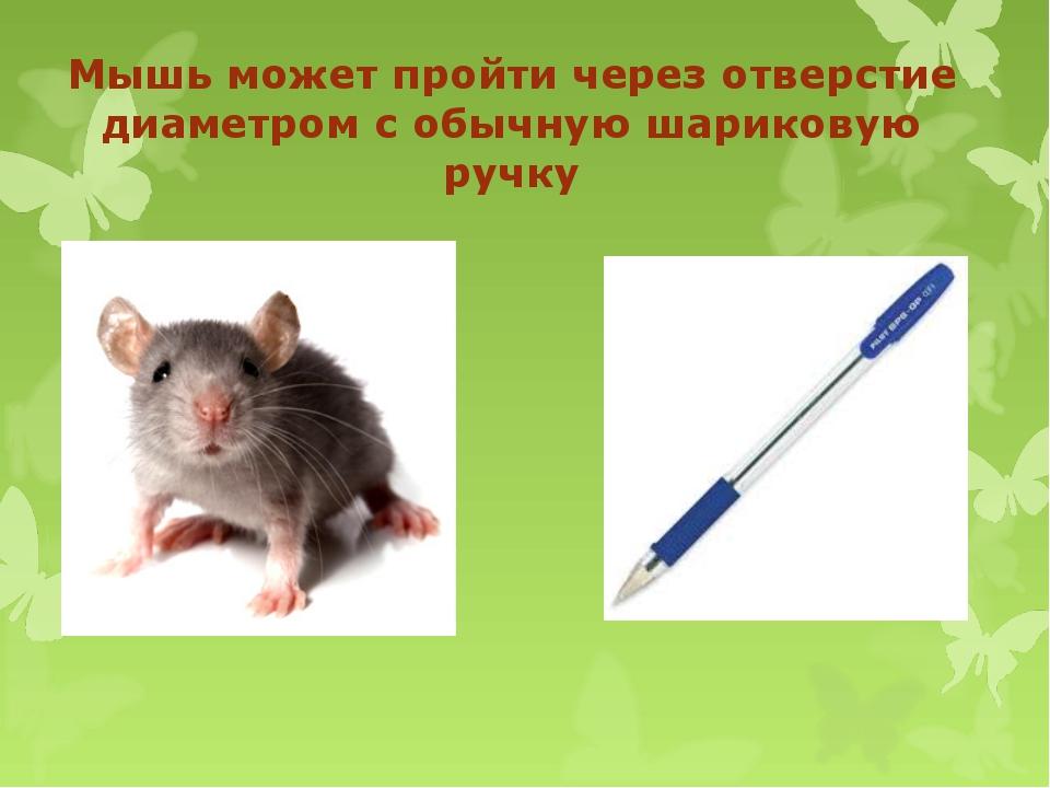 Мышь может пройти через отверстие диаметром с обычную шариковую ручку
