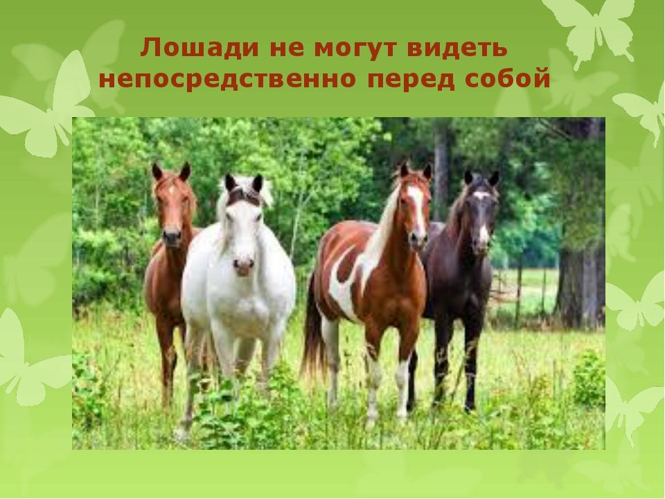 Лошади не могут видеть непосредственно перед собой