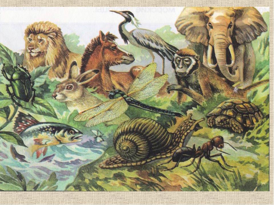 Зоология животные картинки