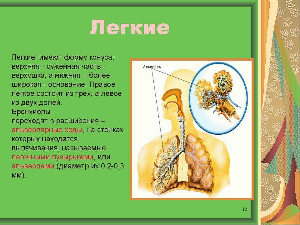 * Легкие Лёгкие имеют форму конуса: верхняя - суженная часть - верхушка, а ни...