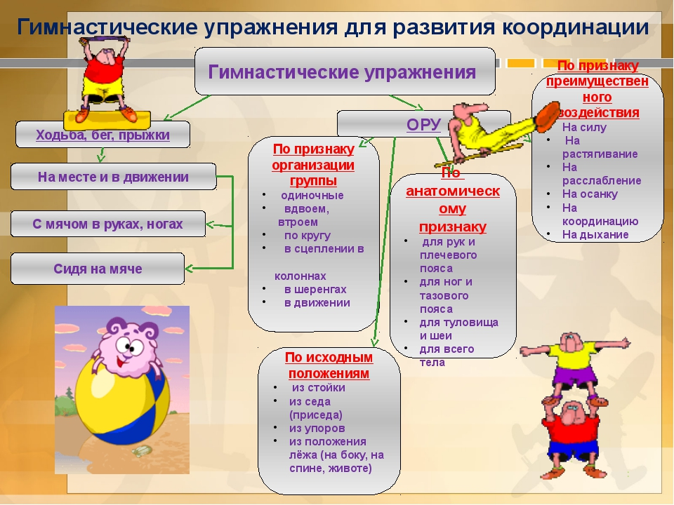 Гимнастические упражнения для развития координации Гимнастические упражнения...