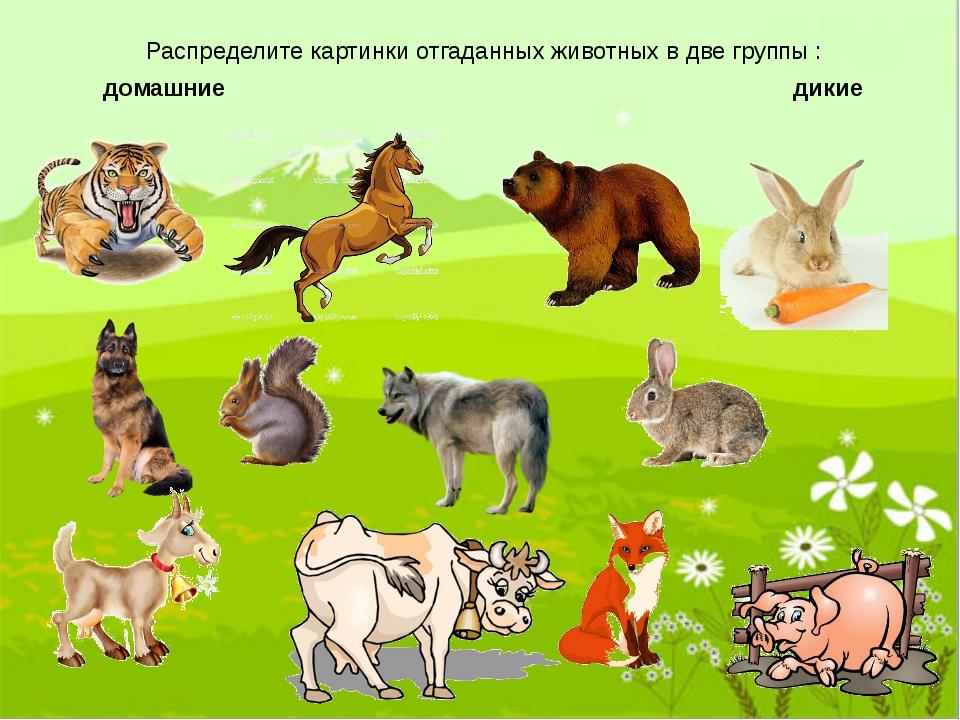 Картинки животных хорошем качестве