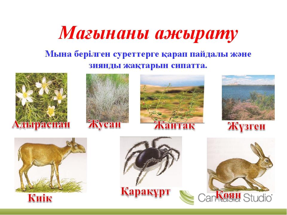 Мағынаны ажырату Мына берілген суреттерге қарап пайдалы және зиянды жақтарын...