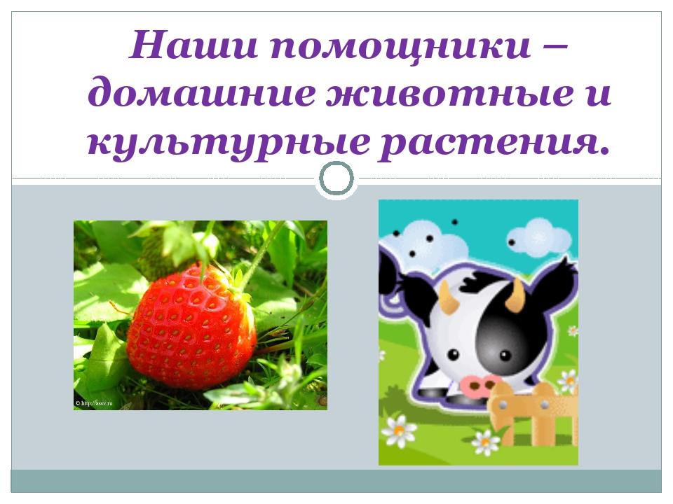 Наши помощники – домашние животные и культурные растения.