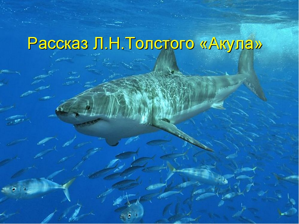 Рассказ Л.Н.Толстого «Акула»