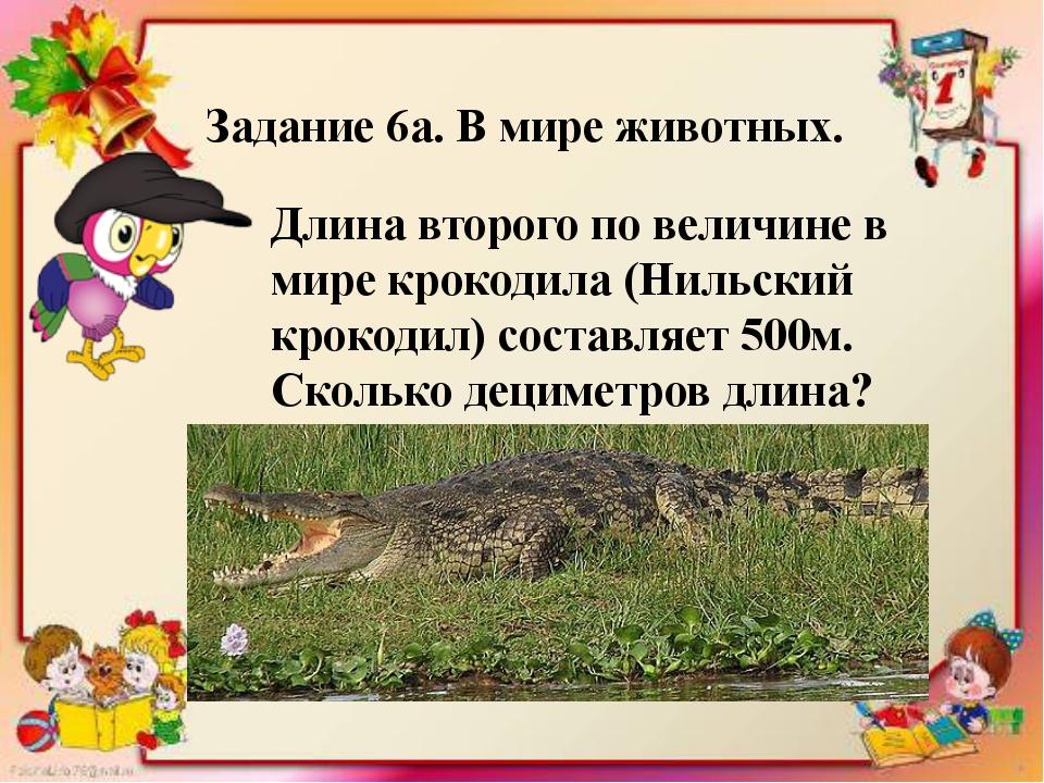 . Задание 6а. В мире животных. Длина второго по величине в мире крокодила (Ни...