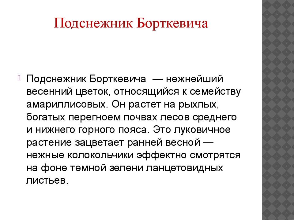 Подснежник Борткевича — нежнейший весенний цветок, относящийся к семейству...