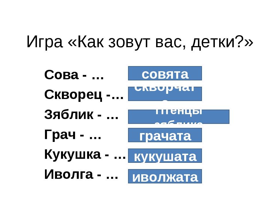Игра «Как зовут вас, детки?» Сова - … Скворец -… Зяблик - … Грач - … Кукушка...