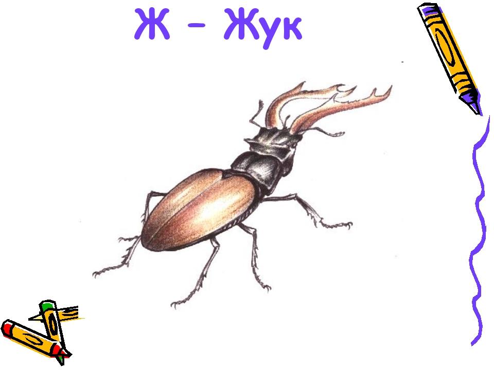 российских картинка комара и жука час публикация набрала