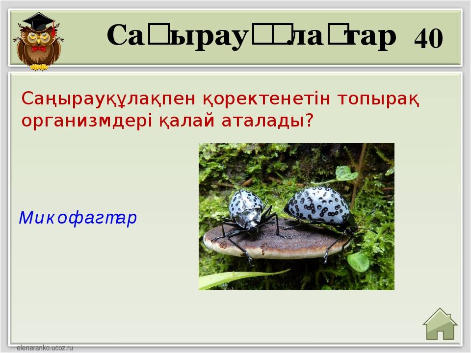 40 Микофагтар Саңырауқұлақтар Саңырауқұлақпен қоректенетін топырақ организмде...