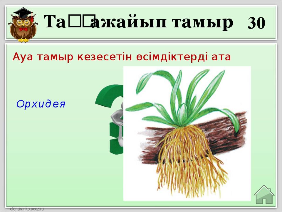 30 Орхидея Ауа тамыр кезесетін өсімдіктерді ата Таңғажайып тамыр