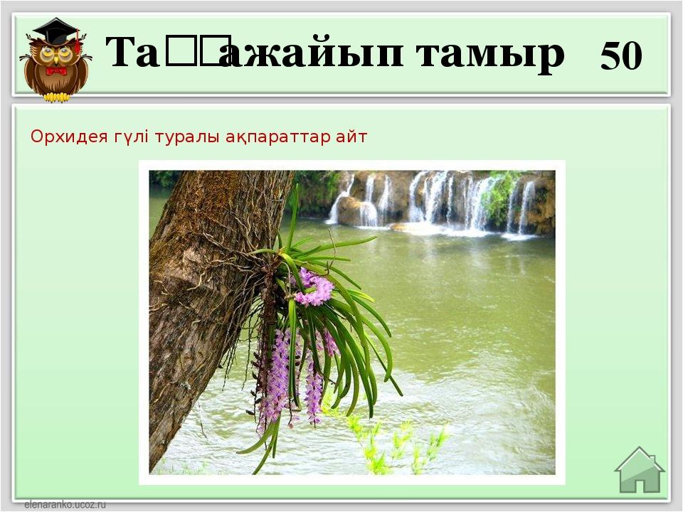 50 Орхидея гүлі туралы ақпараттар айт Таңғажайып тамыр