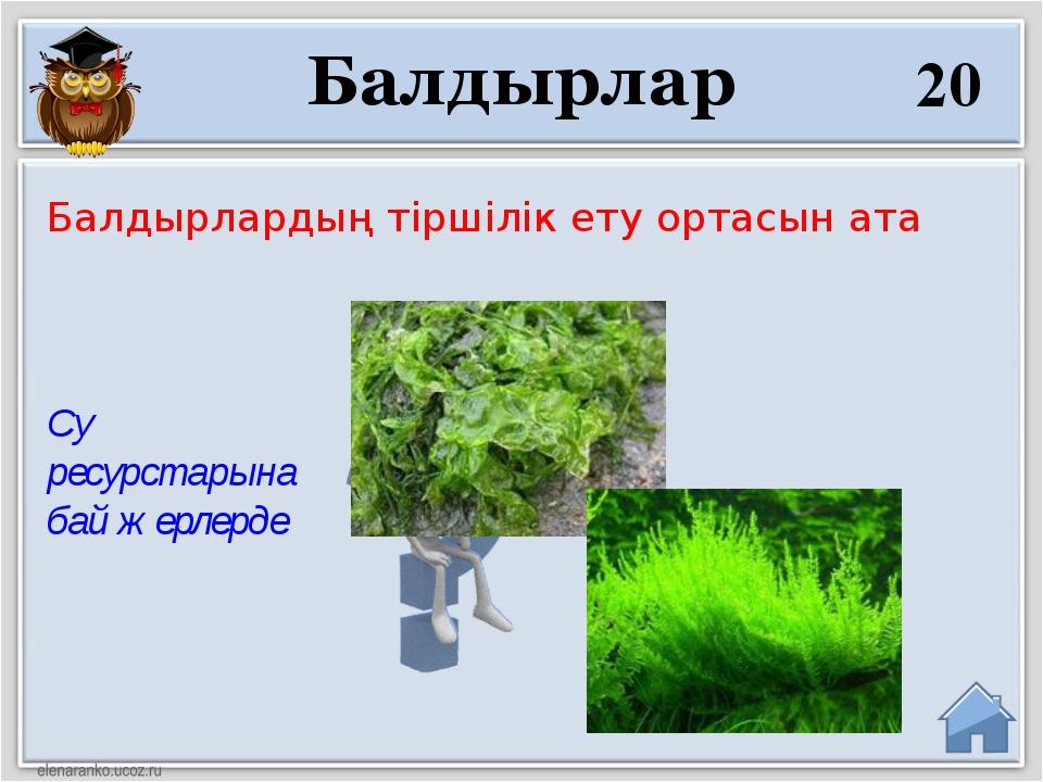 Су ресурстарына бай жерлерде Балдырлардың тіршілік ету ортасын ата 20 Балдырлар