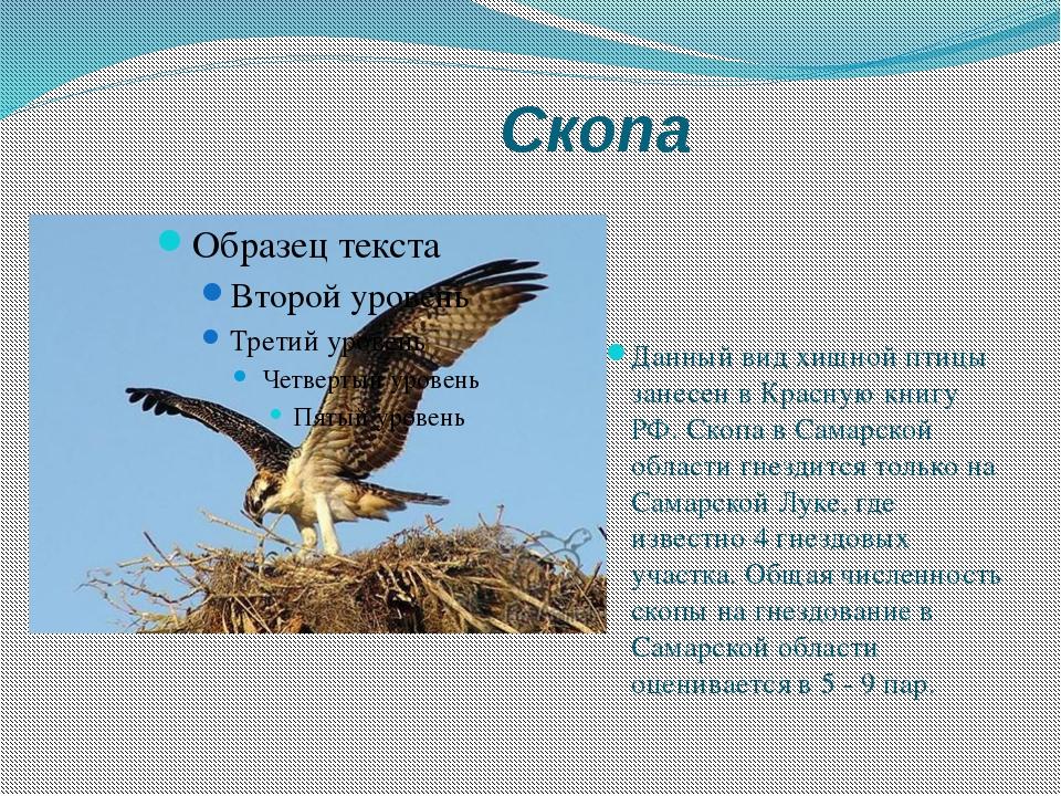 Скопа Данный вид хищной птицы занесен в Красную книгу РФ. Скопа в Самарской...