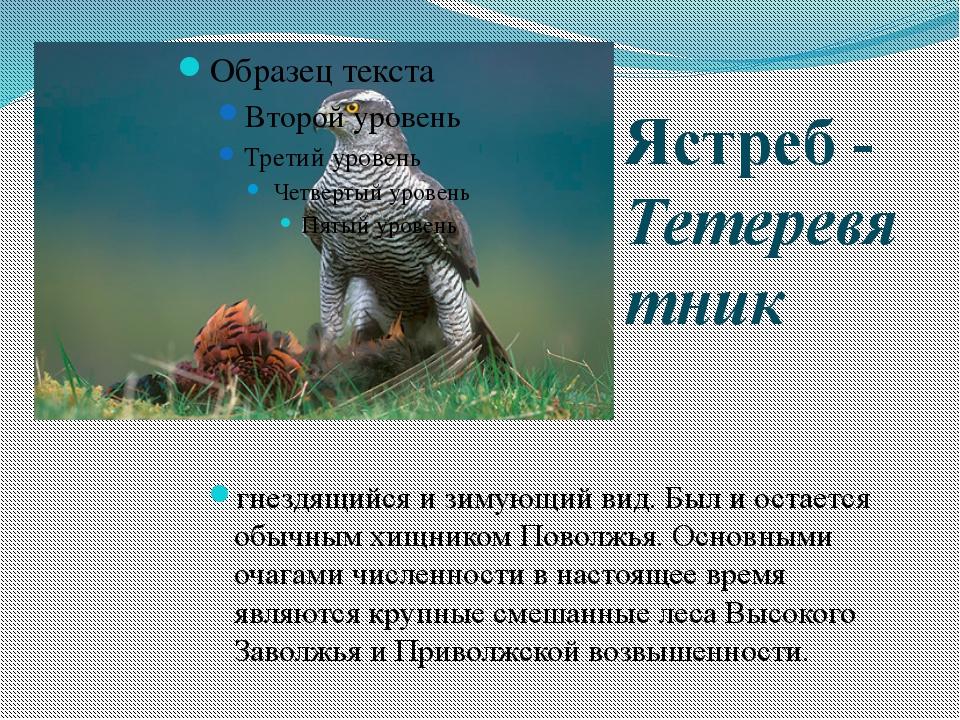 обои интерьере птицы самарской области фото и названия играли