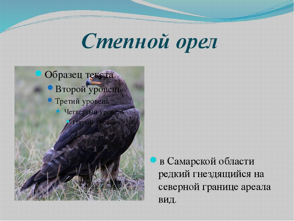 Степной орел в Самарской области редкий гнездящийся на северной границе ареал...