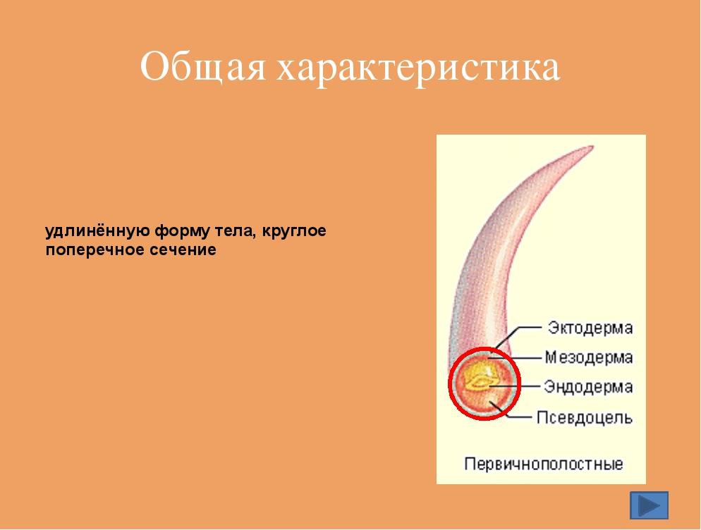 Проверь свои знания Выдай паспорт 1. Двусторонняя симметрия 2. Кожно-мускульн...
