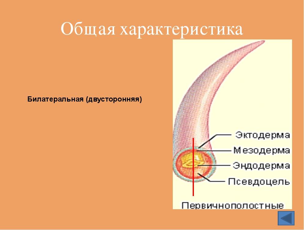 Опасное заболевание вызывают филярии У круглых червей хорошо развиты органы д...