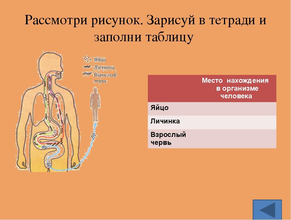 Заболевание энтеробиоз вызывают острицы. да Ответь «Да» или «НЕТ»