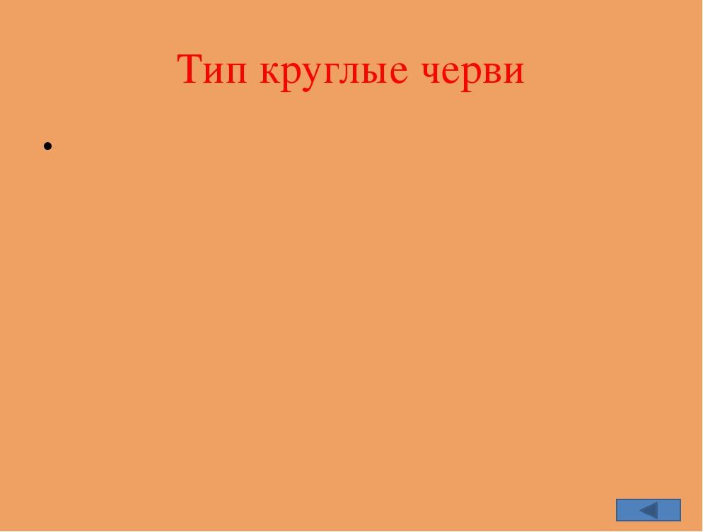 Содержание История изучения Систематика типа Общая характеристика Строение Ра...