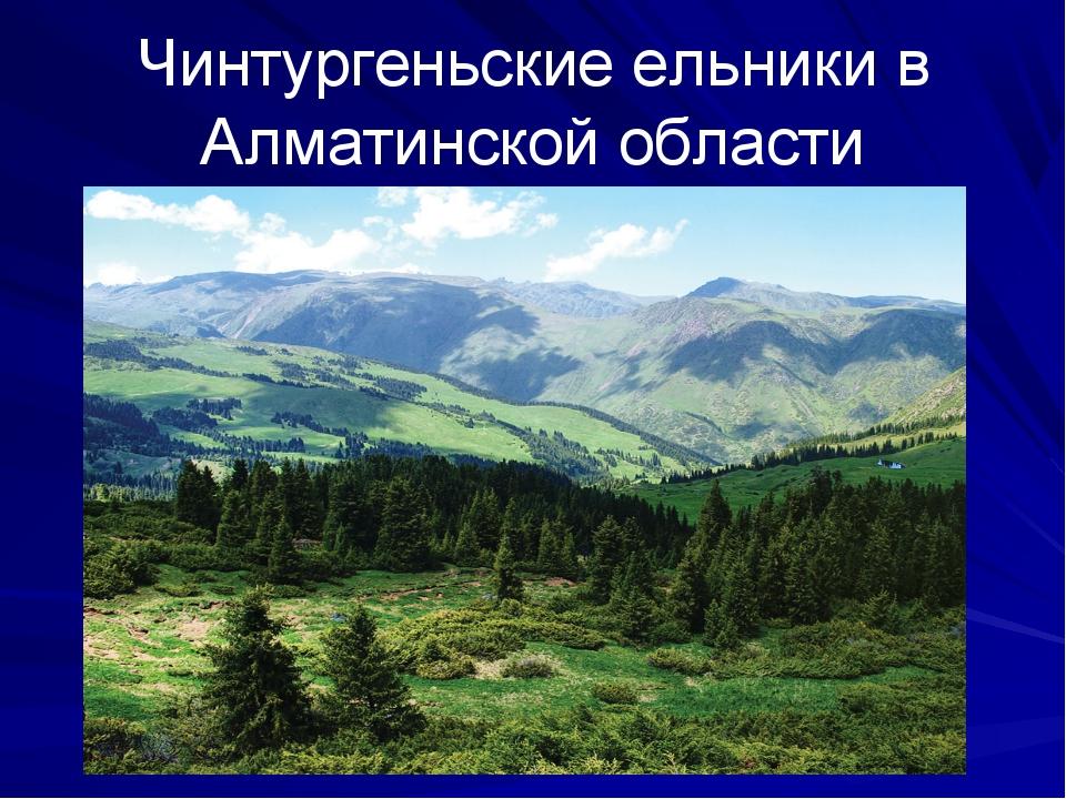 Чинтургеньские ельники в Алматинской области